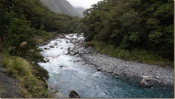 NZL01356